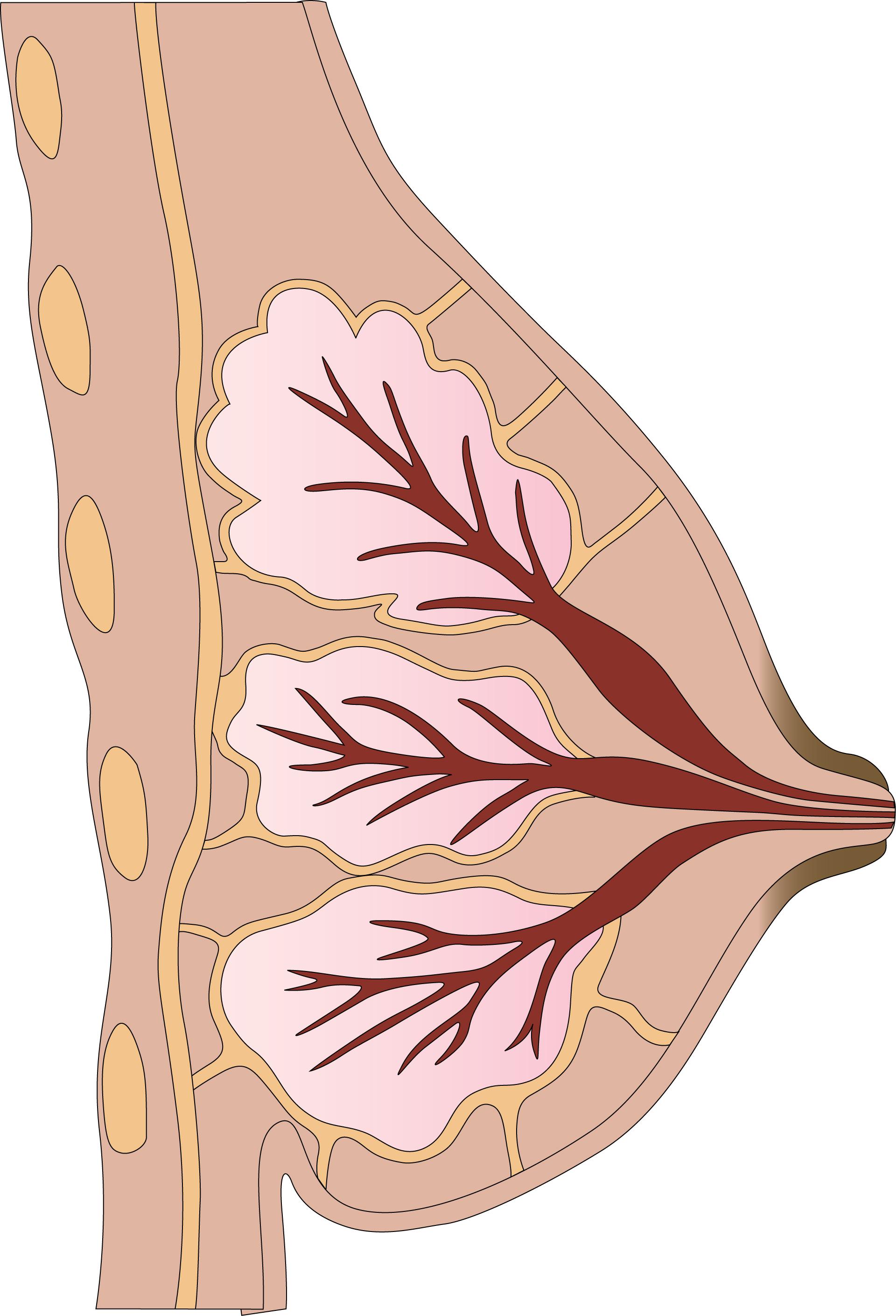 flüssigkeit aus der brust